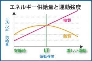 エネルギー供給量と運動強度