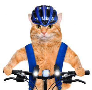 バイクトレーニング