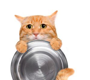 空腹なネコ!