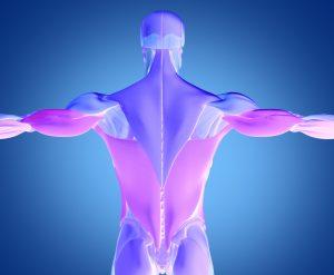 筋膜&筋膜リリース