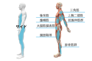 サイド筋膜