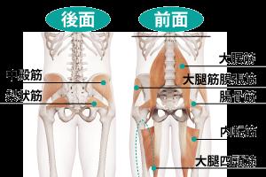 股関節の筋肉群