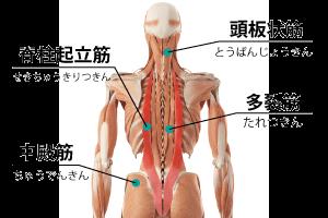 慢性疲労の筋膜