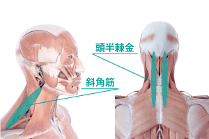 睡眠の筋膜