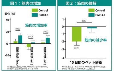 HMBの筋肉増加量と筋肉維持量