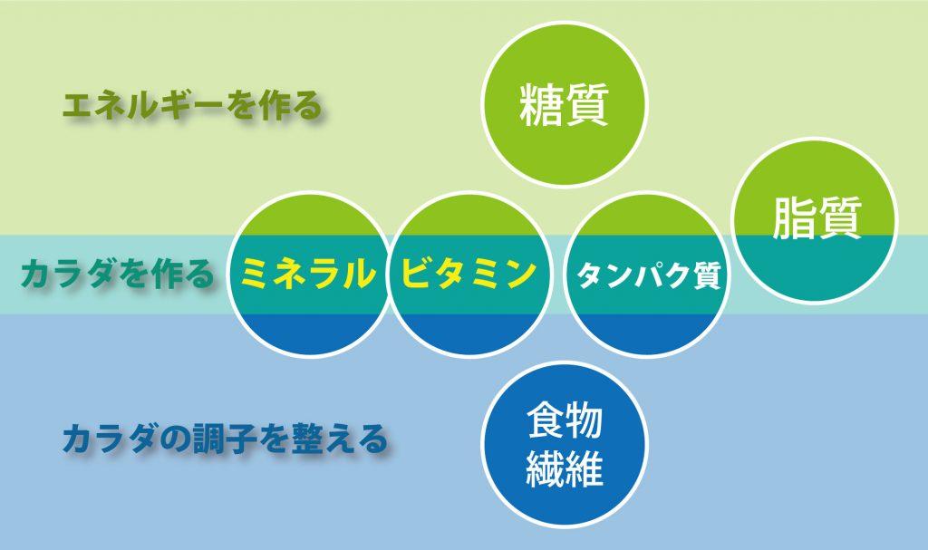 栄養の代謝(役割)