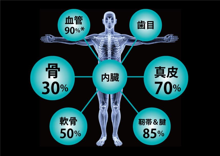 コラーゲンの体内分布