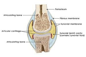 繊維状の骨の構造