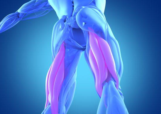 肉離れにならない筋肉
