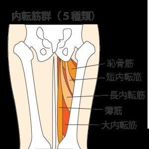 内転筋群5種類