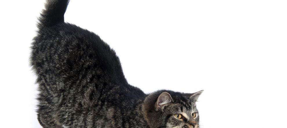 ネコでもできるストレッチ!