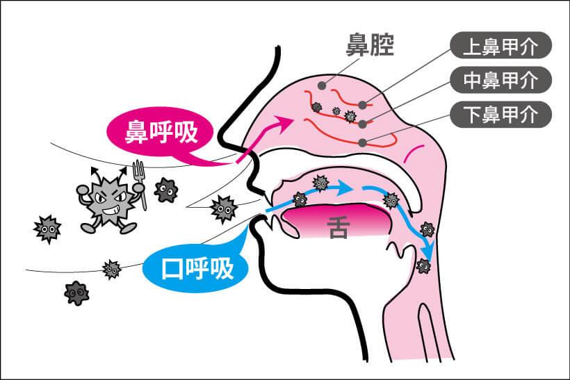 鼻腔の呼吸