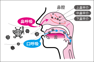 口呼吸のデメリットと鼻呼吸のメリット