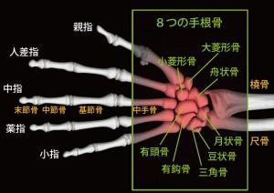 8つの手根骨