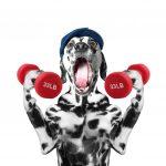 持久力トレーニングで効果的な遅筋の鍛え方2つの法則