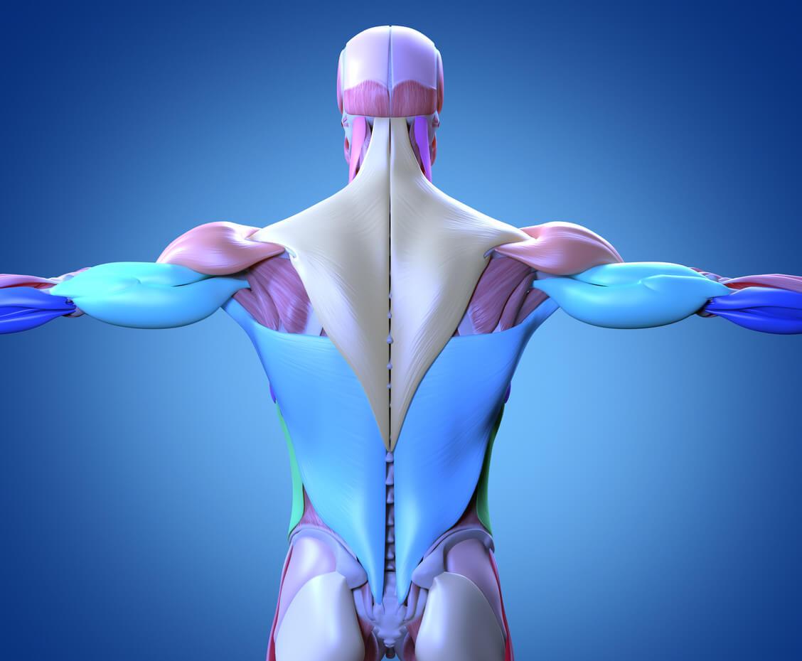 筋膜とは?
