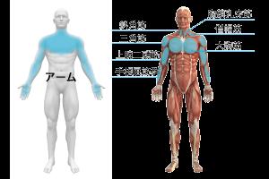 アーム筋膜