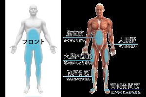 フロント筋膜