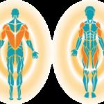 筋膜リリースの効果を高める3つのポイント!