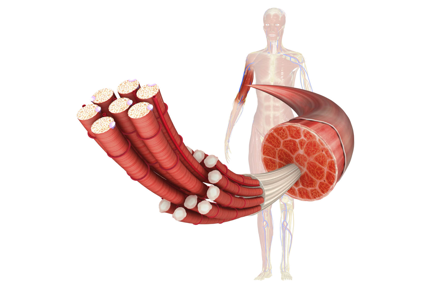 筋膜3つの種類