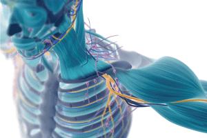 神経や血管を圧迫