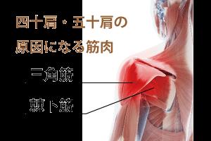 四十肩と五十肩の筋膜リリース
