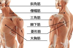 肩こりの筋膜リリース