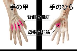指の筋膜群