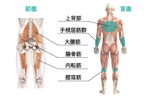 冷え性の筋膜リリース