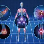 プロテオグリカン7つの効果と関節炎改善機能!