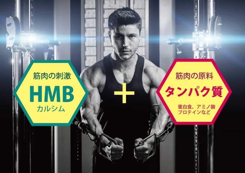 HMB効果にはタンパク質が必要
