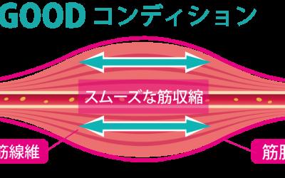 筋線維と筋膜