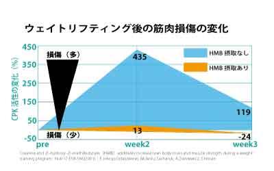 HMB摂取による筋損傷の違い