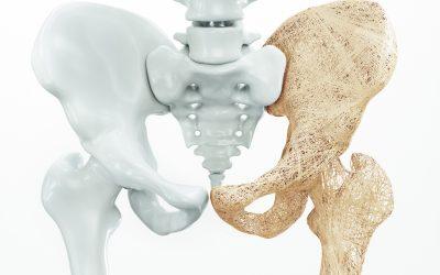 骨とファイバープロテイン