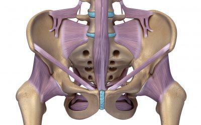 骨盤の靭帯群